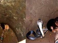 2 Anak Anjing ini Terjebak di Sumur Dengan King Kobra, Sang Pemilik Anjing Malah Bengong Saat Lihat Ular Lakukan Hal ini