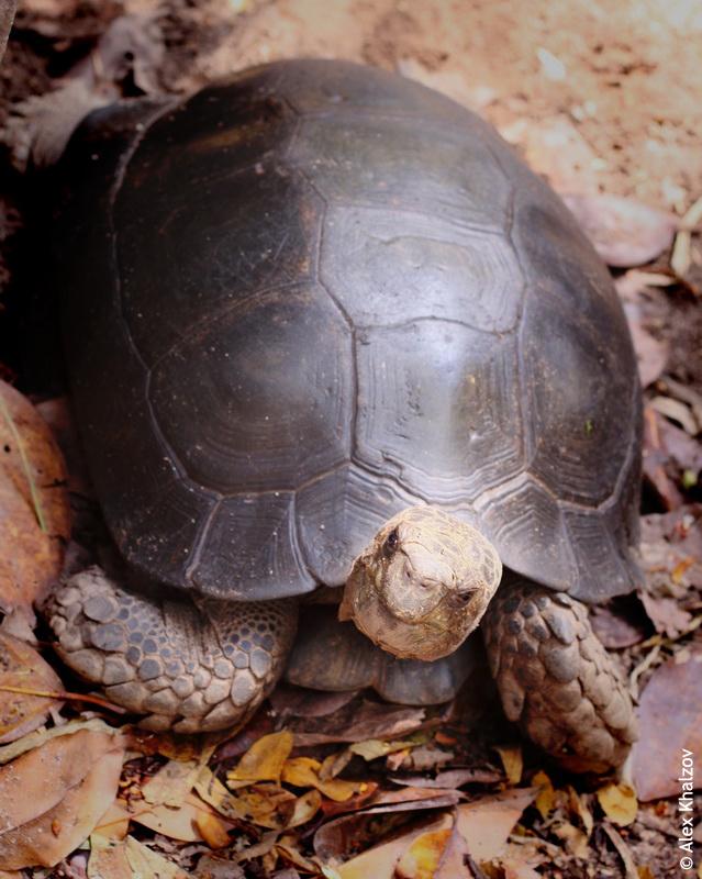 Черепаха в Тае