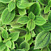 Realizará Ecosur Tercer Taller de Ciencia de Plantas