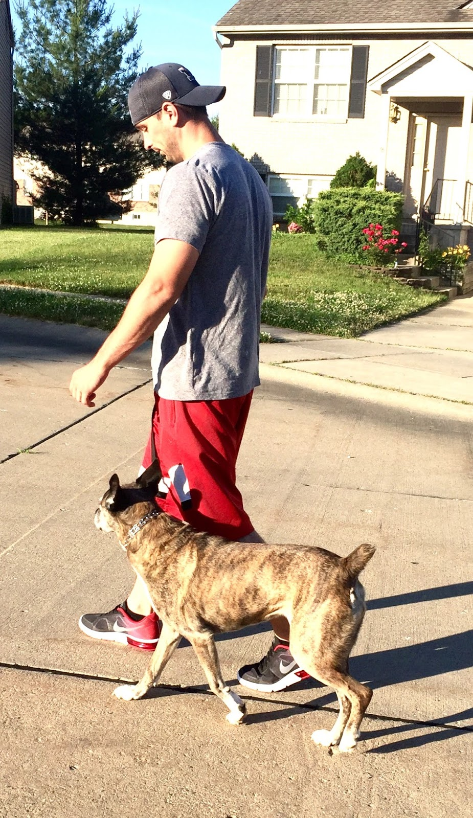 Walk This Way The Right Way To Walk Your Dog The Ruff Life