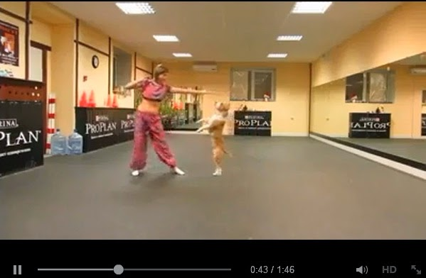 http://www.funmag.org/video-mag/funny-videos/doggie-dance-video/