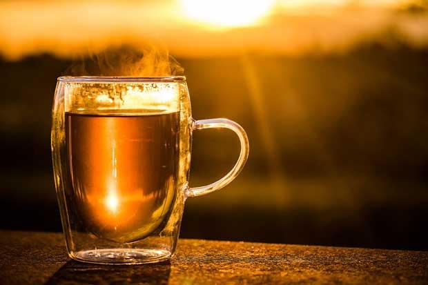 daun karet dijadikan teh