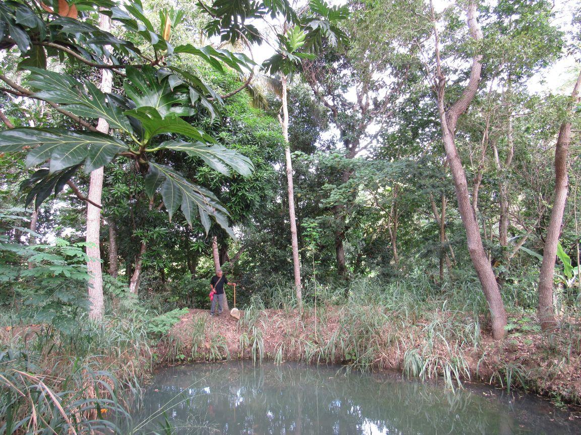 Audubon center of les cayes for Garden pool tilapia
