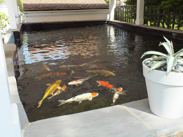 Fish Pond Requirements