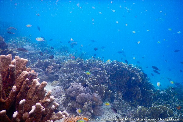 Marine environment in coral reef of Waigeo island