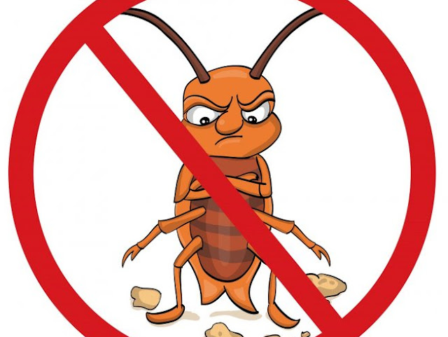Home Remedies To Get Rid Of Roaches
