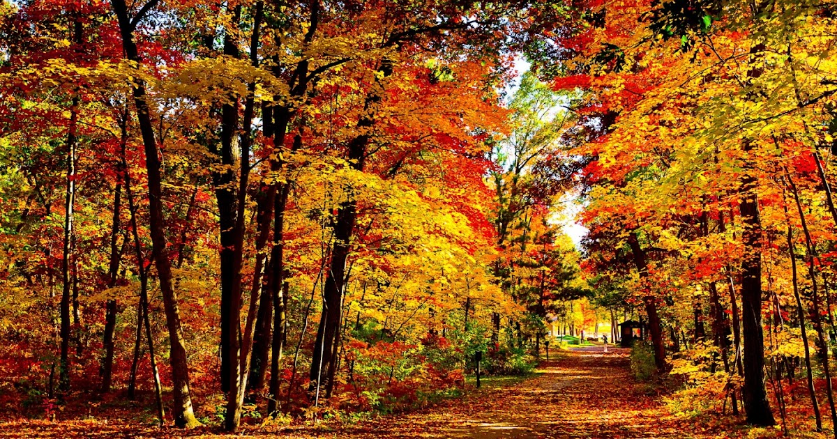 immagini autunno per desktop