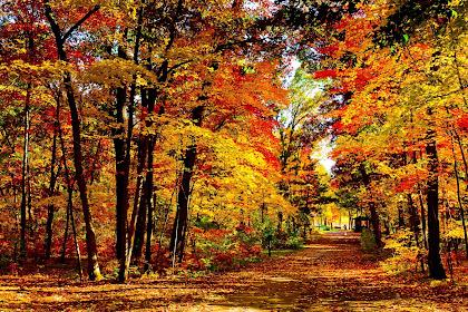 Sfondi per desktop autunno