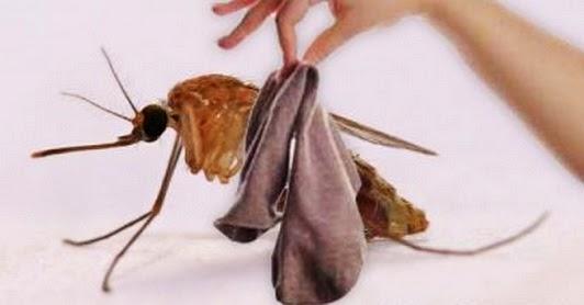 cara mengusir nyamuk secara alami