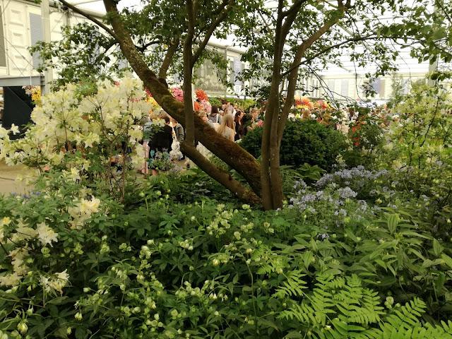 Chelsea Flower Show 2018, ogród leśny