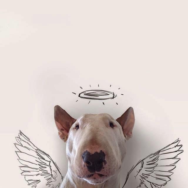 Creatividad inspirada por un perro Bull Terrier