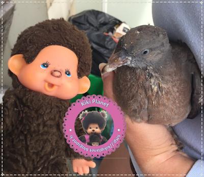 Kiki vintage et Colombine le bébé pigeon - pigeonneau - oiseau -oisillon