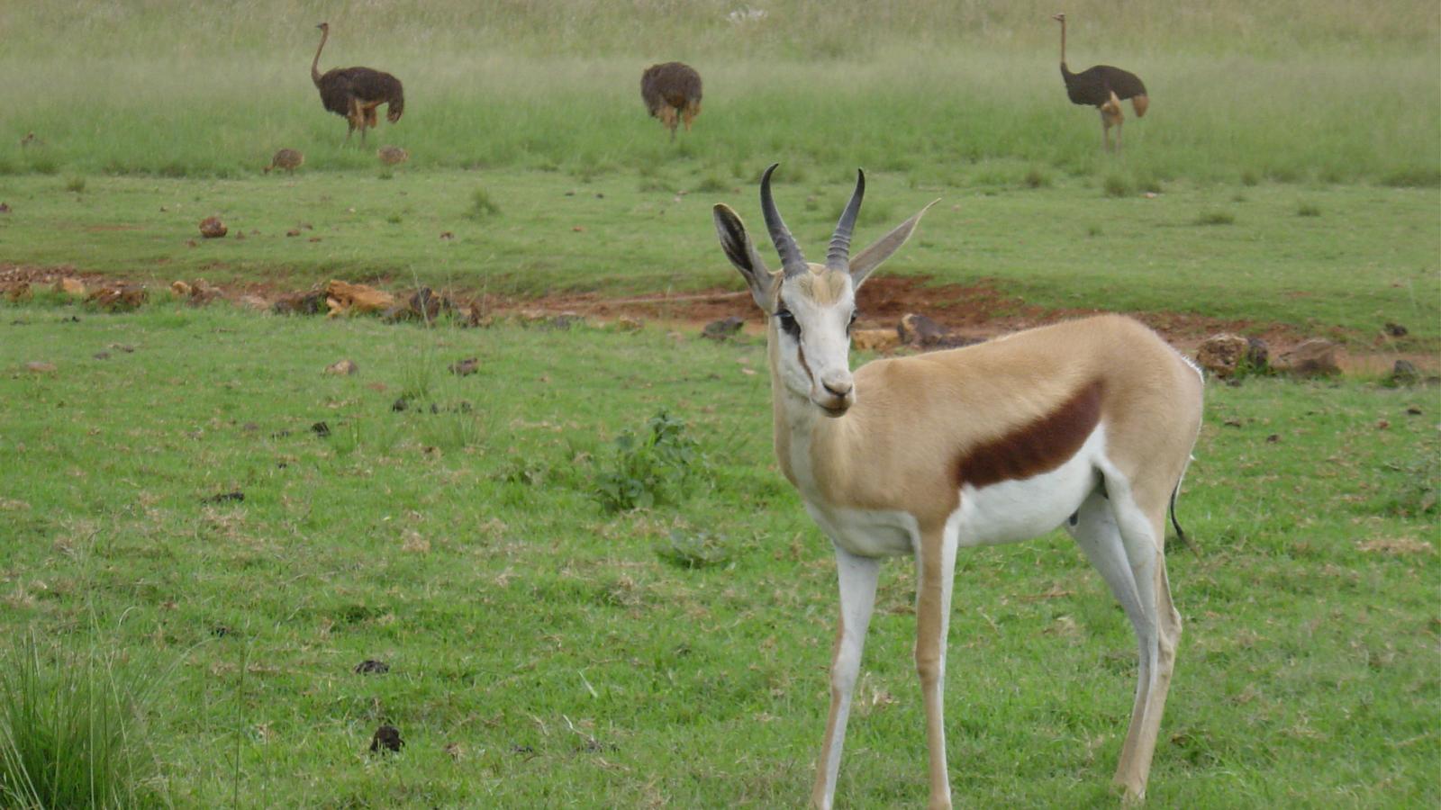 reserve naturelle afrique