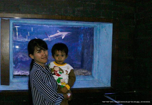 foto-di-depan-aquarium-besar-jual-harga-ikan-terbaru-bukalapak
