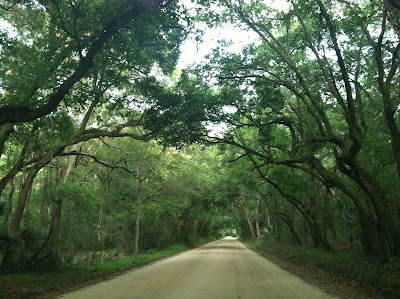 Edisto Island, SC | The Lowcountry Lady
