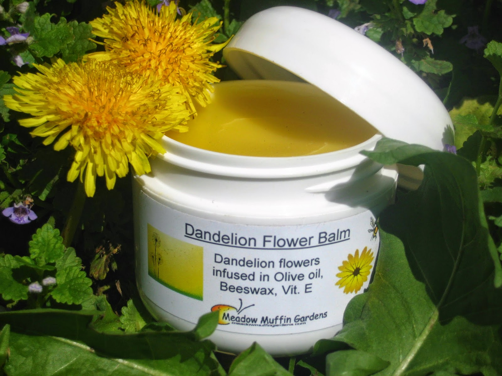 Meadow Muffin Gardens: The Dandy Dandelion, The Remedy For
