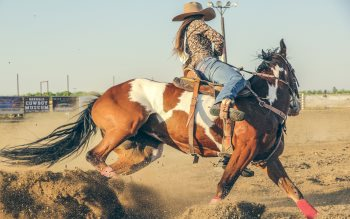 Wallpaper: Cowgirl at Rodeo
