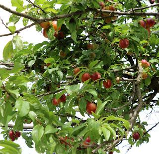 Loads of low hanging fruit