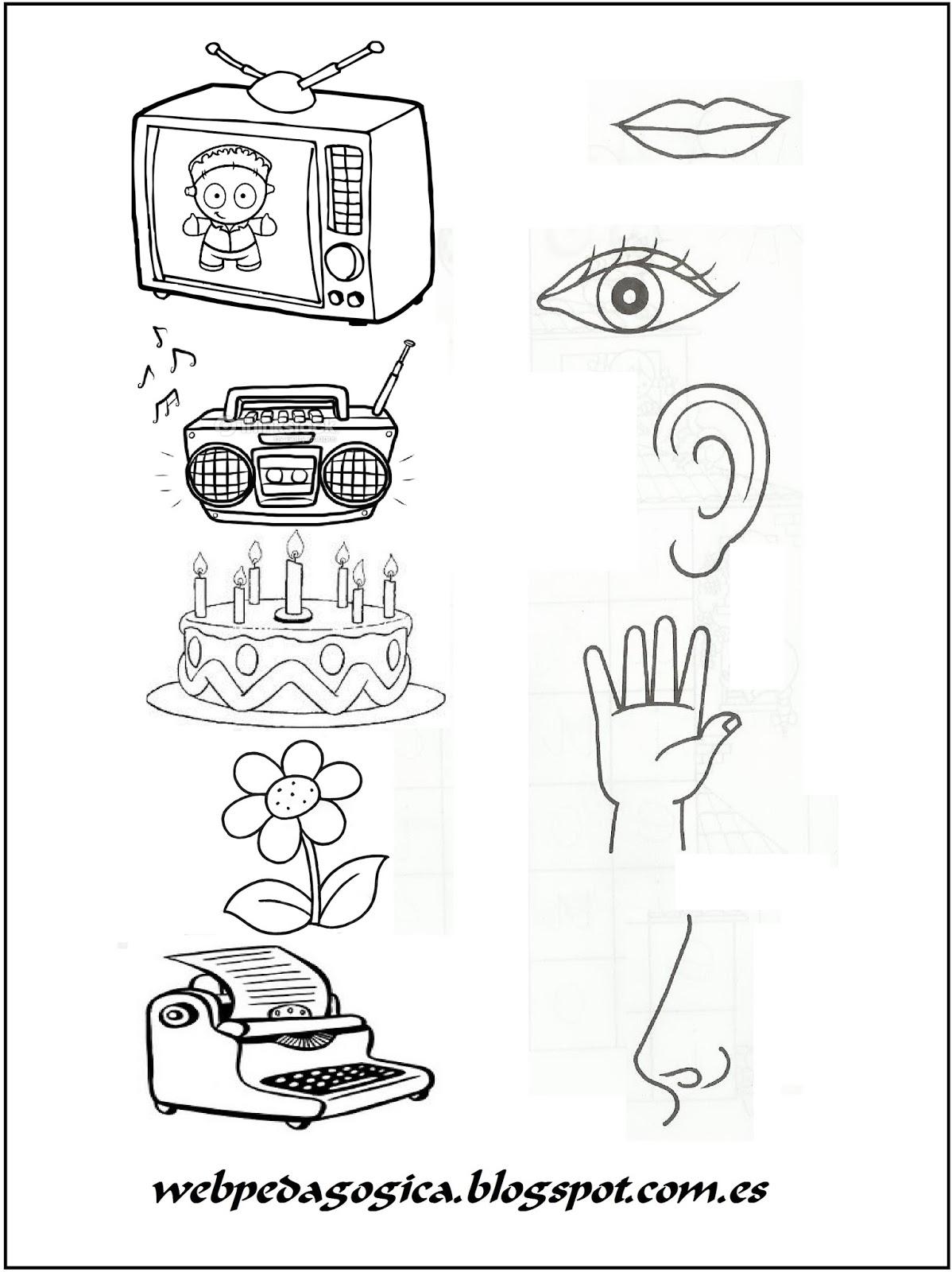 Descubrir Y Aprender Los 5 Sentidos Une Cada Dibujo Con Su