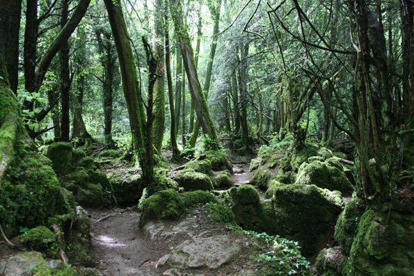 Berfantasi in Gunung Singgalang Lumut Forest