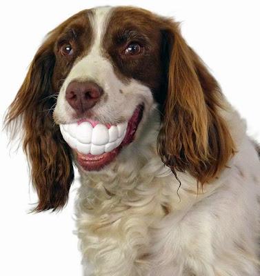 perro con su dentadura grande