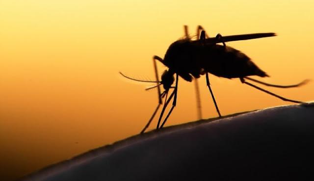 Και δεύτερος θάνατος στην Αργολίδα από τον ιό του Δυτικού Νείλου