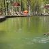 В пруд парка Горького выпустили птиц (Видео)
