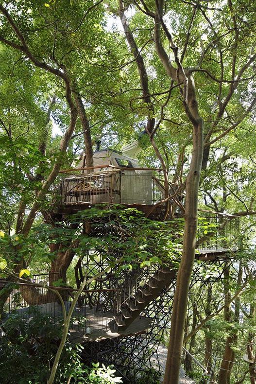 La mas enorme home del árbol en Japón es construida alrededor de un árbol de 300 años de edad