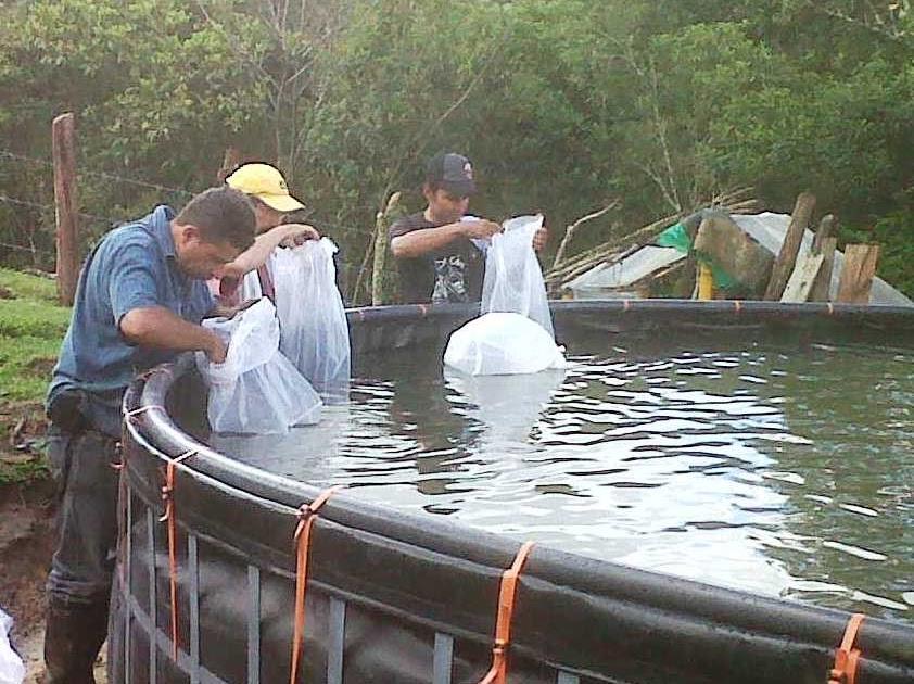 Jovenes rurales emprendedores finalizaci n programa de for Piscicultura en tanques plasticos