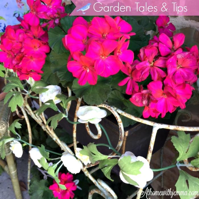 gardening-tips-series-athomewithjemma