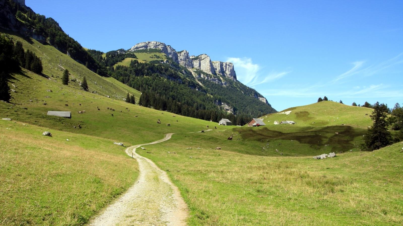 Bureaublad achtergrond met een landschap met koeien in de Alpen of ...