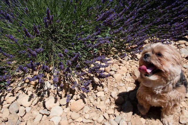 viagem com cachorro viagem pet friendly mudar com cachorro para europa