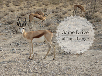 Game drive al Lapa Lange in Namibia