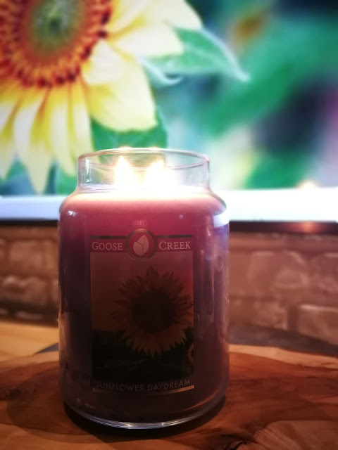 Sunflower daydream od Goose Creek