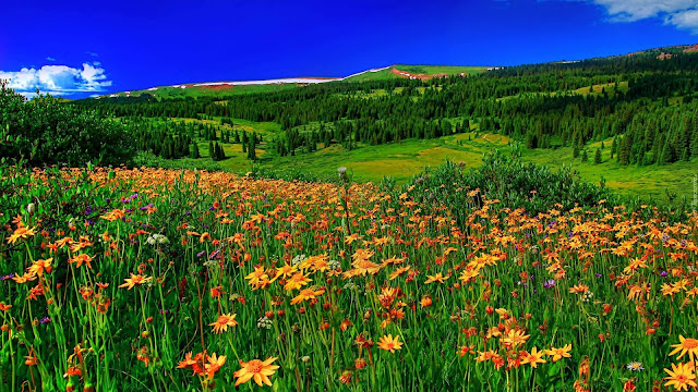 spring-mountain-flowers-meadow-with-green-grass-forest