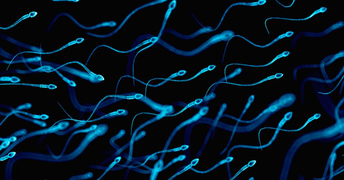 Cientistas descobrem que sêmen humano pode hospedar 27 tipos de vírus