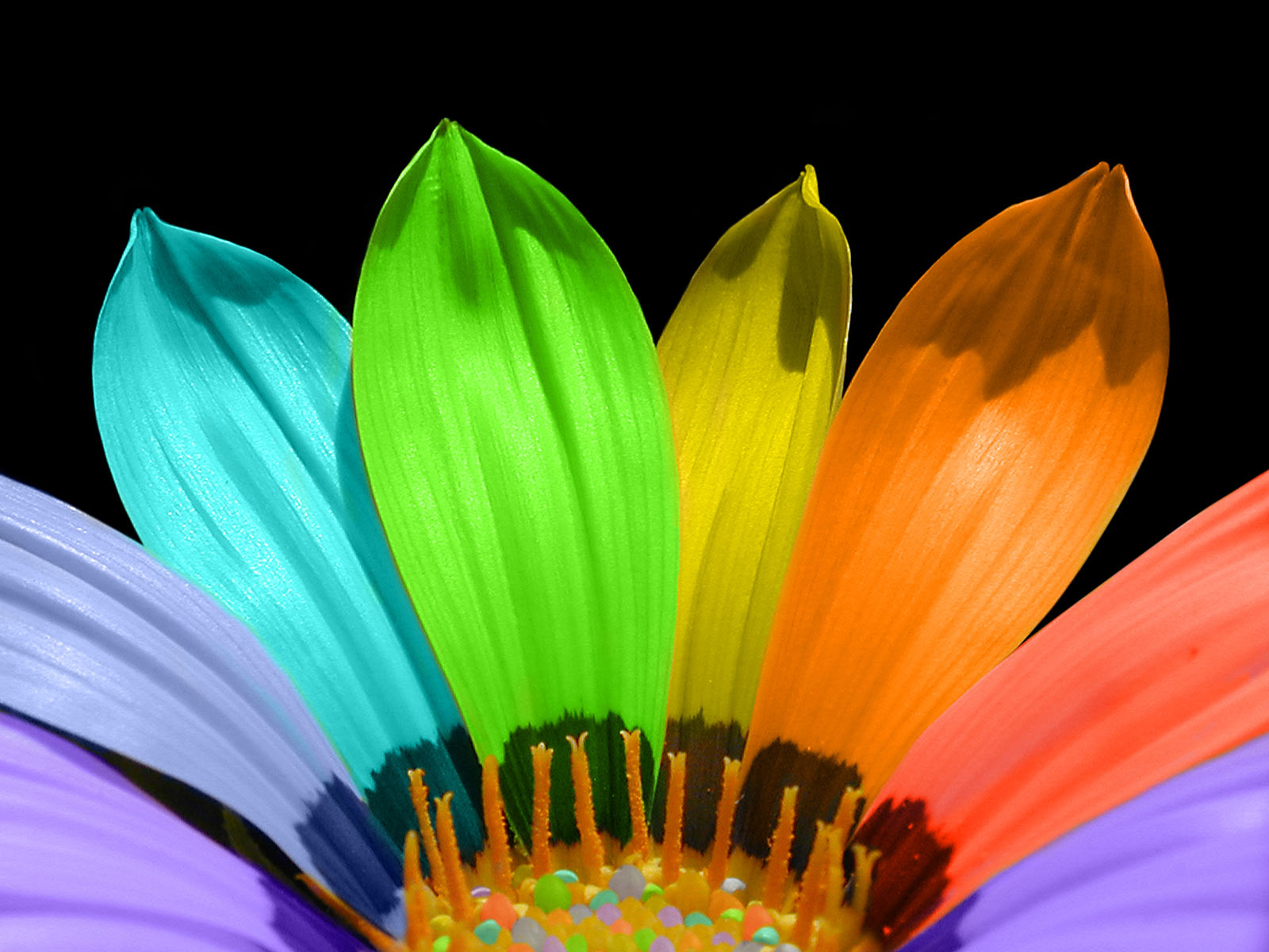 rainbow flowers wallpaper paintings - photo #27