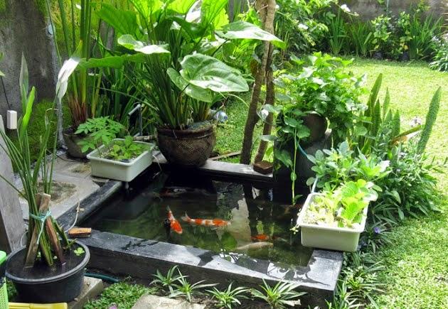 Cara Kerja Sistem Aquaponik  Akuarium Ikan Hias