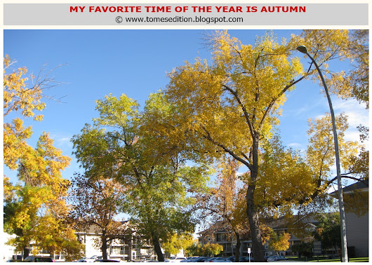 Why I love Autumn Season…