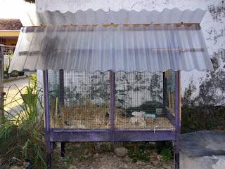 Burung Branjangan - Makanan yang disiapkan Untuk Penangkaran Burung Branjangan dan Kandang Yang cocok Untuk Penangkaran Burung Branjangan