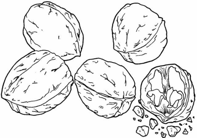 Fructe Toamna Nuci Fise Colorat Gutui