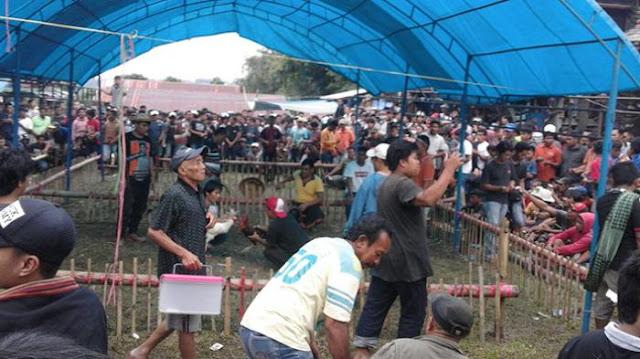 Ealah! Bawa Parang, Oknum TNI AL Yang Bekingi Sabung Ayam Tantang Polisi yang Menggerebek Arena Judi