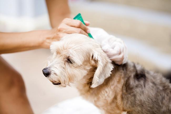 Środki przeciw pchłom i kleszczom dla psów