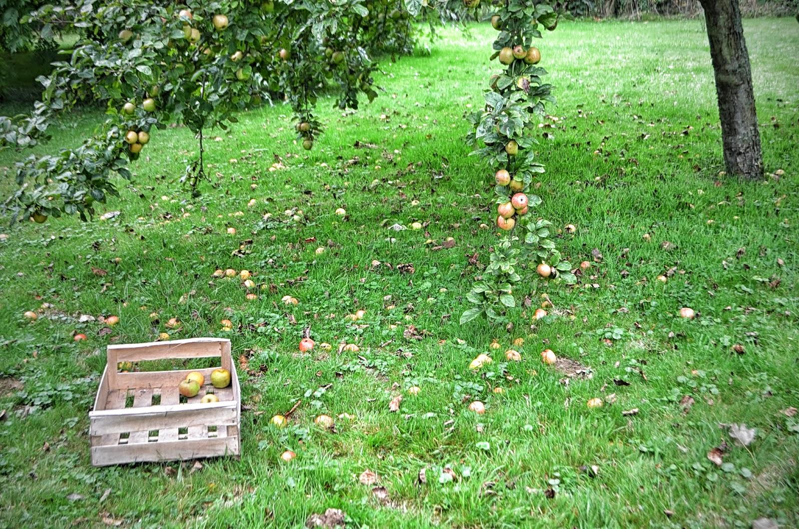 normandie ou le d 39 orl ans l 39 automne pommes swing la bacaisse dans l 39 fond d 39 la bo te bois. Black Bedroom Furniture Sets. Home Design Ideas