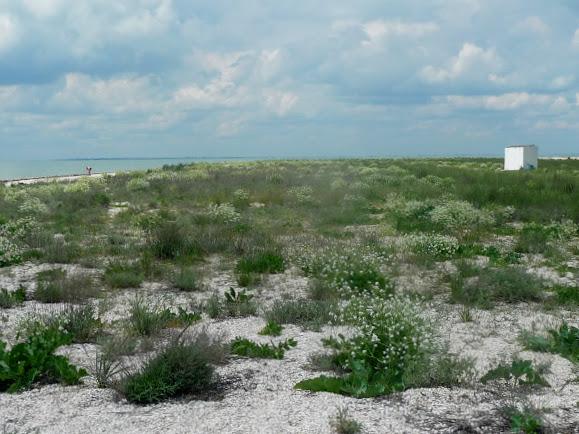 Острів Бирючий