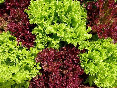 """Что посадить семенами на даче в июне? / Блог """"Дача-это просто!"""""""