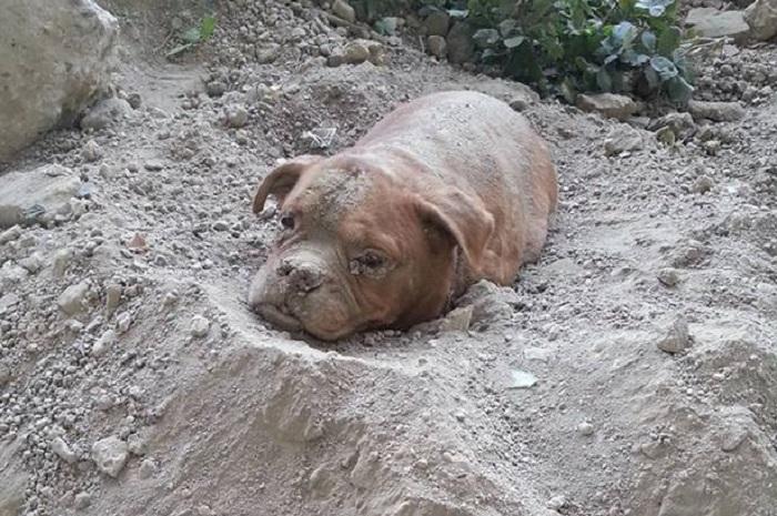 Resultado de imagen para Athena perrita enterrada viva