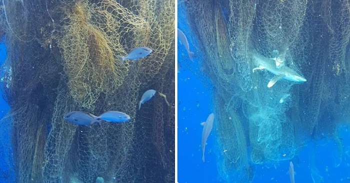 Divers Discovered A Giant Floating Fishing Net With Hundreds Of Dead Sharks