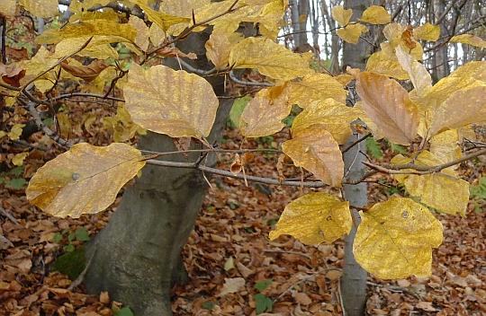 Barwy jesienie jeszcze nie opadły zupełnie.