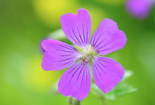 Pictures Of Flowers Violets